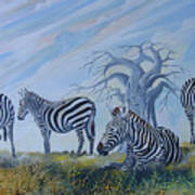 Browsing Zebras Poster