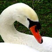 Bruges Swan 2 Poster