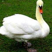Bruges Swan 3 Poster