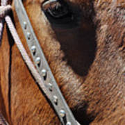 Bryce Canyon Horse Portrait Poster