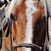 Bryce Canyon Horseback Ride Poster