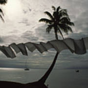 Buca Bay, Laundry And Palm Trees Poster by James L. Stanfield