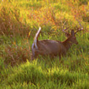 Buck On The Run  Poster