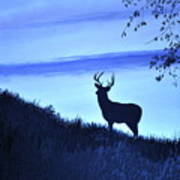 Buck Silhouette In Blue Poster
