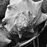 Bucket Of Sea Shells Poster