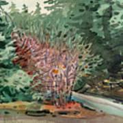 Buckeye And Redwoods Poster