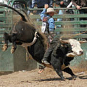 Bucking Bulls 101 Poster by Cheryl Poland