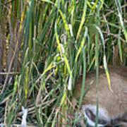 Bucks In The Brush Poster
