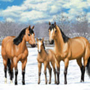 Buckskin Horses In Winter Pasture Poster