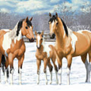 Buckskin Paint Horses In Winter Pasture Poster by Crista Forest