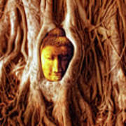 Buddha Of The Banyan Tree Poster