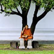 Buddhist Monk Sits Under Tree Poster