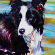 Buddy Border Collie Poster by Kelly McNeil
