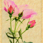 Buds And Bloom - Rose Floral Poster