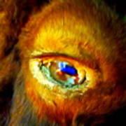 Buffalo Eye Poster