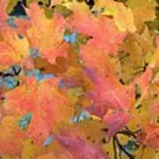 Buffalo Fall Leaves Poster
