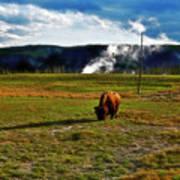 Buffalo In Yellowstone Poster
