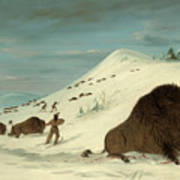 Buffalo Lancing In The Snow Drifts. Sioux Poster
