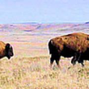 Buffalo Range In Kansas Poster