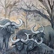 Buffaloes In The Bushveld Poster