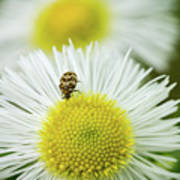 Bugged Flower Poster
