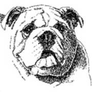 Bulldog-portrait-drawing Poster