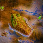 Bullfrog In Water Poster