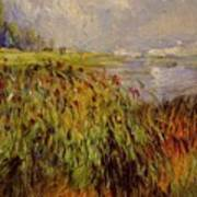 Bulrushes On The Banks Of The Seine 1874 Poster