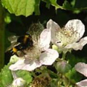 Bumblebee Poster
