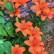 Bunch Of Orange Lilies Poster