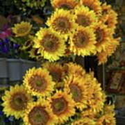 Bunches Of Sunflowers Poster