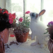 Bunny In Window Poster