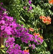 Burgazada Island Flower Color Poster