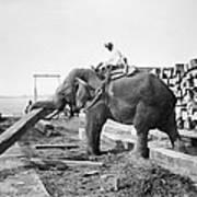 Burma: Elephant Poster