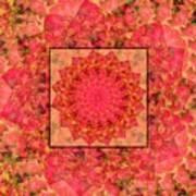 Burning Bush Floral Design  Poster