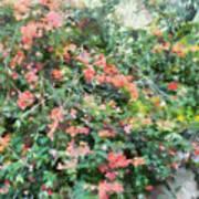 Bush Full Of Flowers. Poster