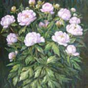Bush Of Pink Peonies Poster