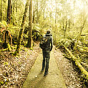 Bushwalking Tasmania Poster