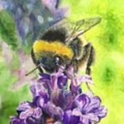 Busy Bumblebee Poster