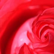 Butler Rose Poster