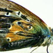 Butter-moth Poster