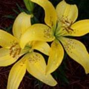 Buttercream Lilies Poster