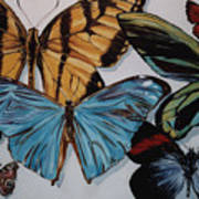 Butterflies Poster