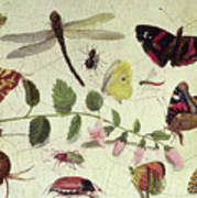 Butterflies, Insects And Flowers Poster