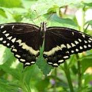 Butterflies Live - 8 Poster