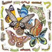 Butterflies Moths Caterpillars Poster