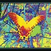Butterfly All Aglow Poster