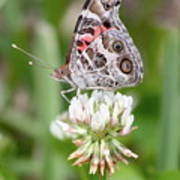 Butterfly And Bugs On Clover Poster