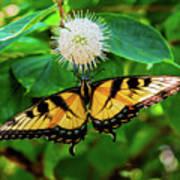Butterfly Beauty Poster