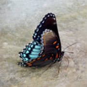 Butterfly Blue On Groovy 2 Poster